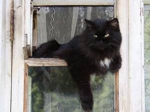 Кот ободрал обои на 70 тысяч рублей в съемной квартире в Нижнем Новгороде