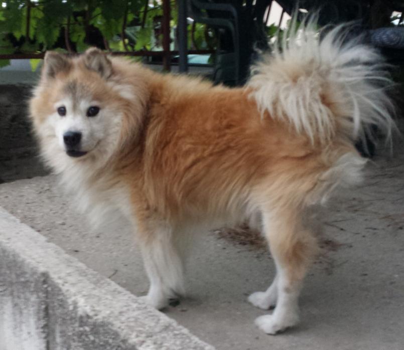 В Роскачестве назвали марки худшего сухого корма для собак - фото 1