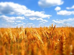 Высокотехнологичное сельское хозяйство будут развивать в юго-восточных районах Нижегородской области