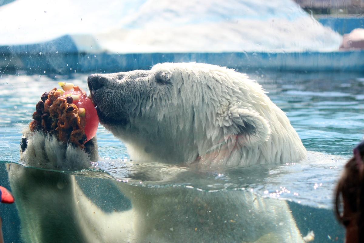 Фруктовым людом кормят животных нижегородского зоопарка из-за аномальной жары - фото 1