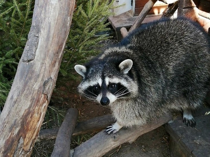 Зоопарк «Лимпопо» откроется для посетителей - фото 1