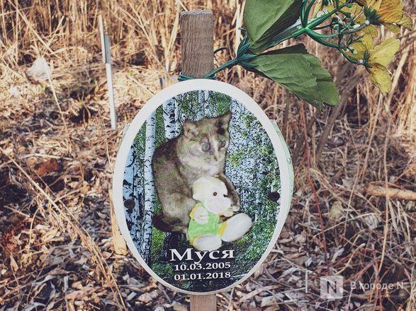 Православный крест над котом: где находится нижегородское кладбище домашних животных - фото 9
