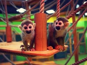 «Трогательное» удовольствие: контактные зоопарки Нижнего Новгорода