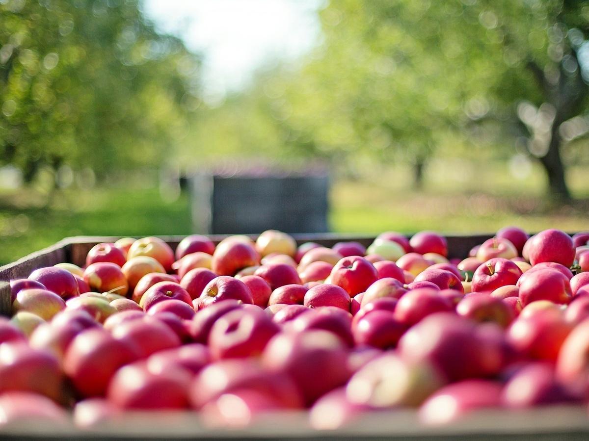На 10% подешевели яблоки в Нижегородской области - фото 1