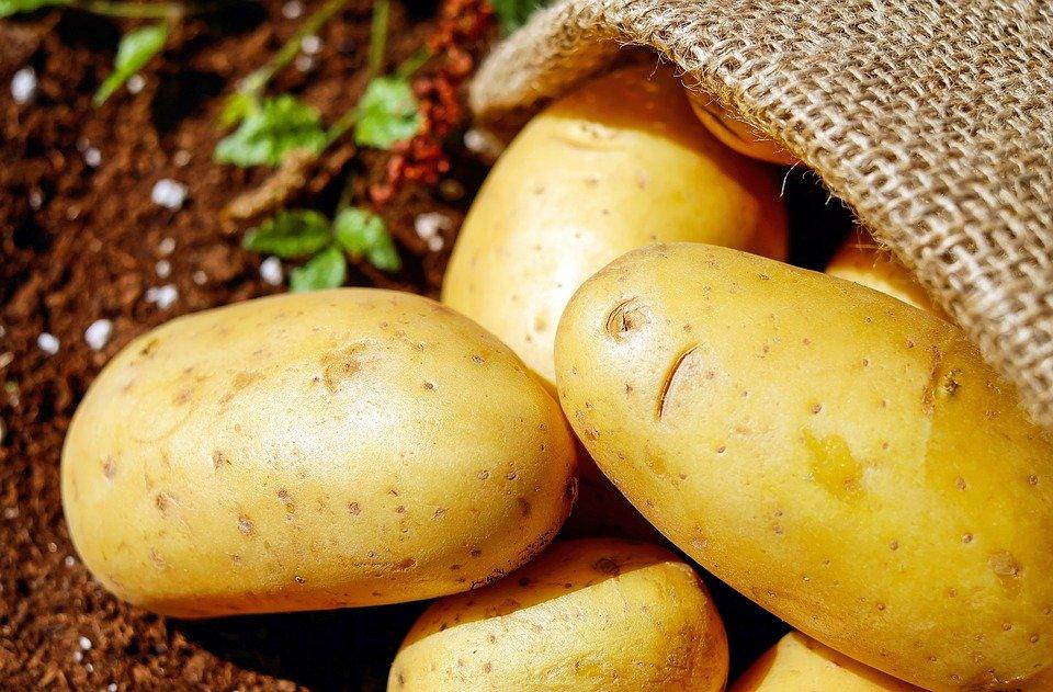 Три признака, по которым можно распознать токсичный картофель - фото 1