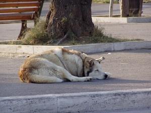 Нижегородцы могут пожаловаться на бродячих собак и кошек