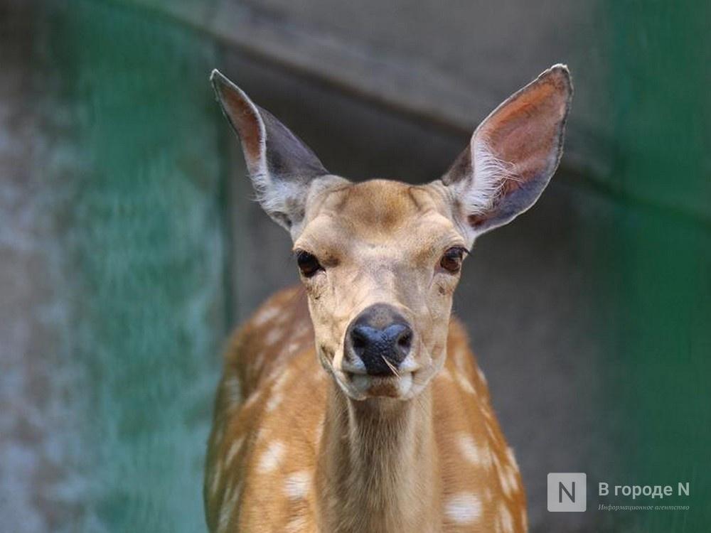 18 питомцев из бывшего «Мишутки» переехали в саранский зоопарк - фото 1