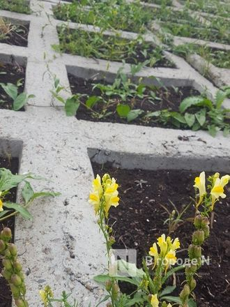 Велодорожка и сады на бетонном склоне: новая жизнь набережной Гребного канала - фото 29