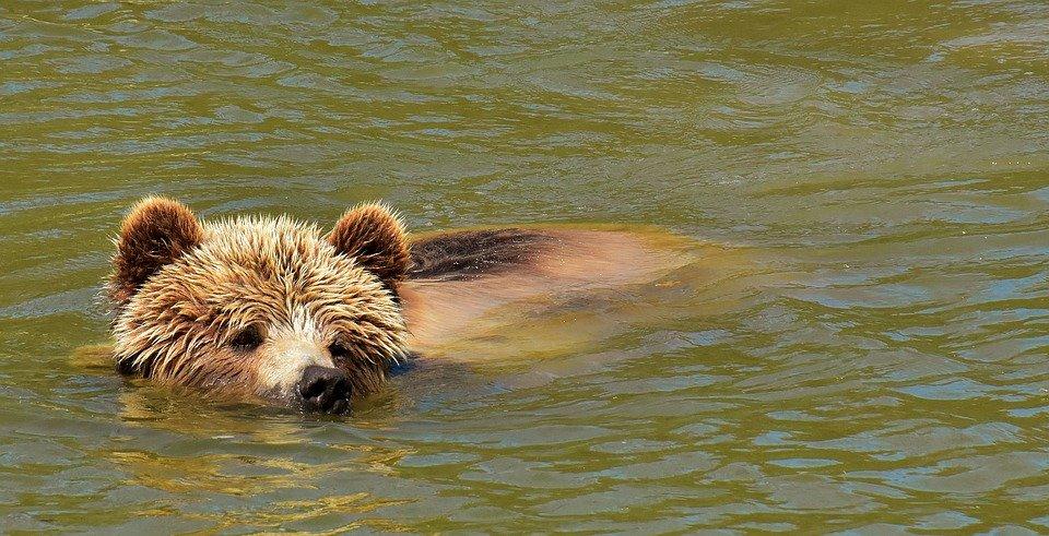 Что делать, если в лесу вы повстречали медведя: инструкция по выживанию - фото 3