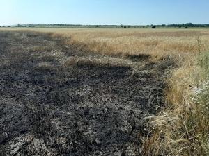 24 гектара пшеницы сгорело в Гагинском районе