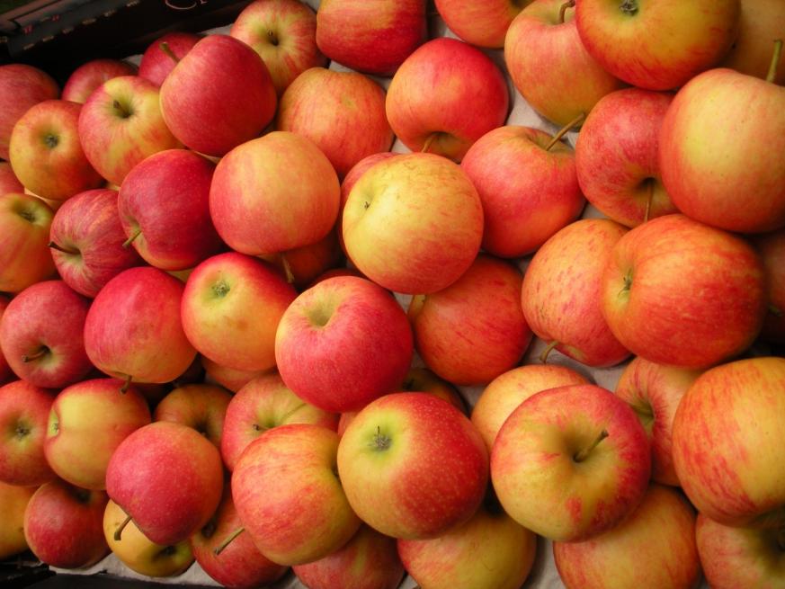 Урожай смородины и яблок планируют увеличить вдвое в Нижегородской области - фото 1