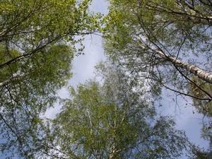 Пожилой грибник потерялся в семеновских лесах