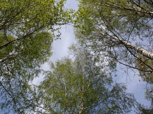 Проект Лесного плана Нижегородской области утвердят до конца года
