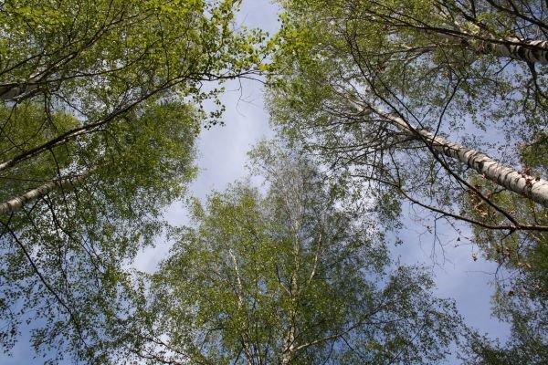 Богородский пенсионер три дня блуждал в лесу - фото 1