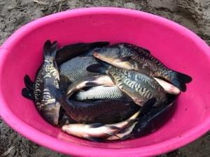 Промышленный вылов рыбы в Нижегородской области будет увеличен в 2,5 раза