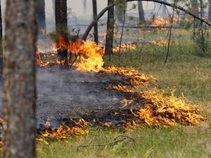 Пятый класс пожарной опасности лесов продержится в Нижегородской области до октября