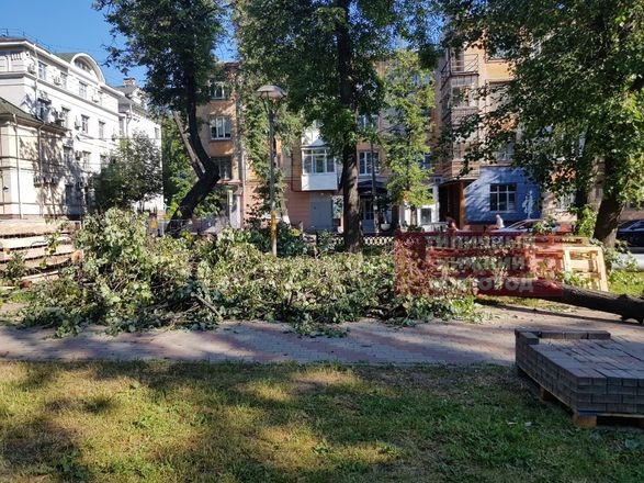 Вырубка деревьев началась в сквере на Звездинке возмутила нижегородцев - фото 3