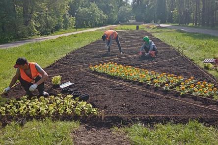 275 тысяч цветов посадят в Автозаводском районе Нижнего Новгорода