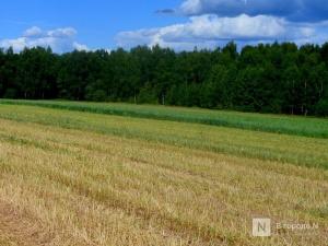 8,4 тысяч тонн семян на случай гибели озимых запасли в Нижегородской области
