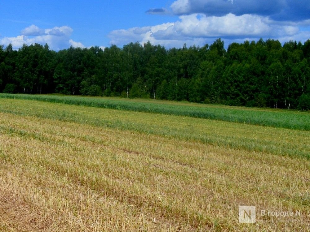 8,4 тысяч тонн семян на случай гибели озимых запасли в Нижегородской области - фото 1
