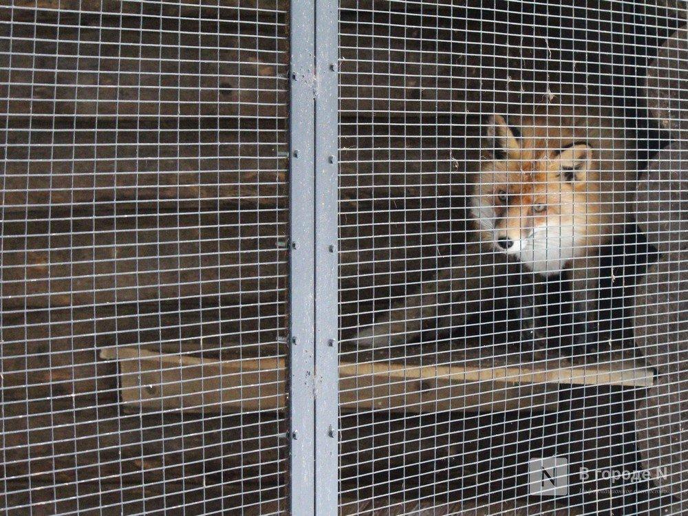 Чем живет «Мишутка»: репортаж из закрытого нижегородского зоопарка - фото 4