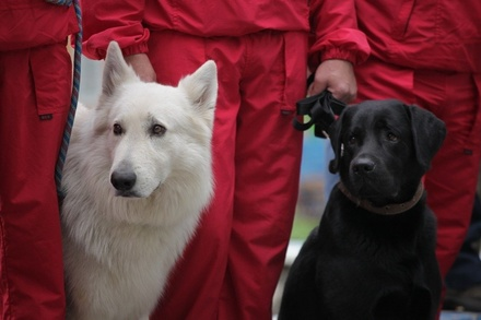 Скамейки для собаководов установили в парке Пушкина
