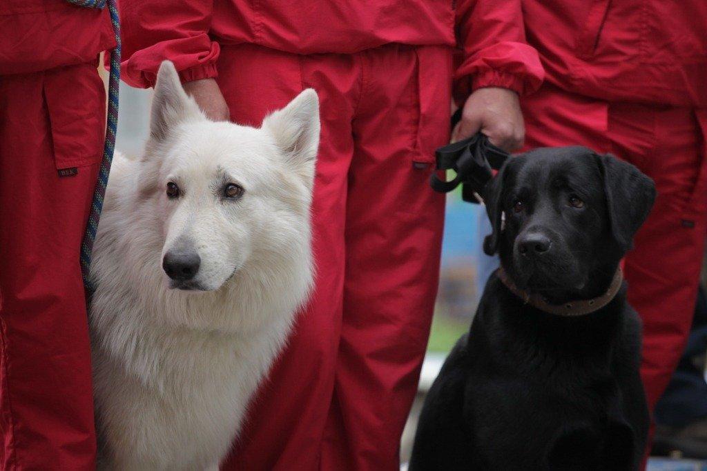 Скамейки для собаководов установили в парке Пушкина - фото 1