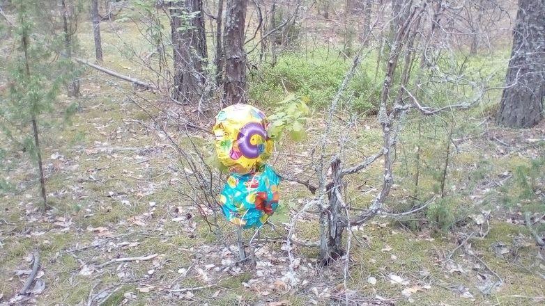 Нижегородцев просят не запускать в небо шары ради Керженского заповедника - фото 5